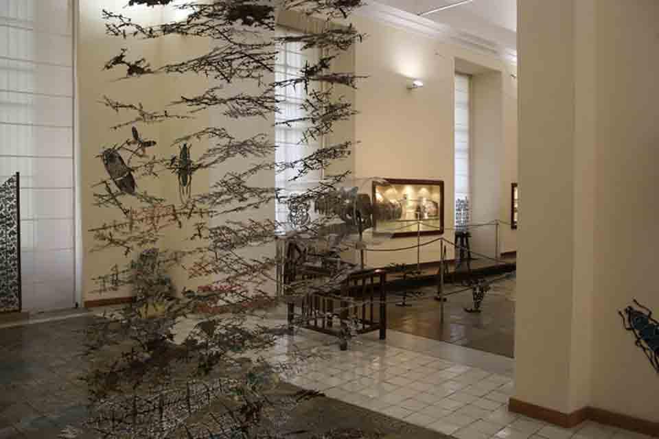 Museo di Paleontolodia di Napoli 2