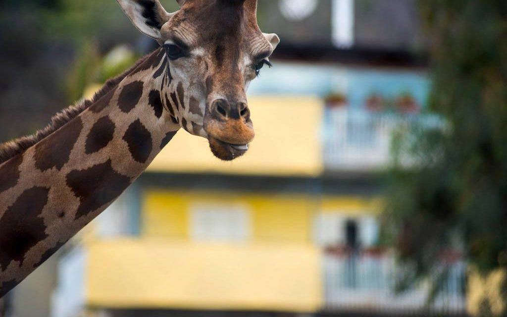 Lo zoo di Napoli: un bioparco nel centro della città