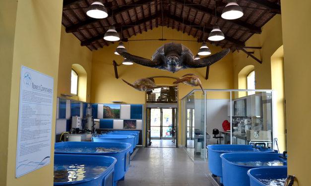 Apre il Centro Ricerche Tartarughe Marine di Portici