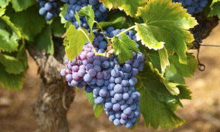 Cantine aperte 2019: in Campania si rinnova la festa del vino