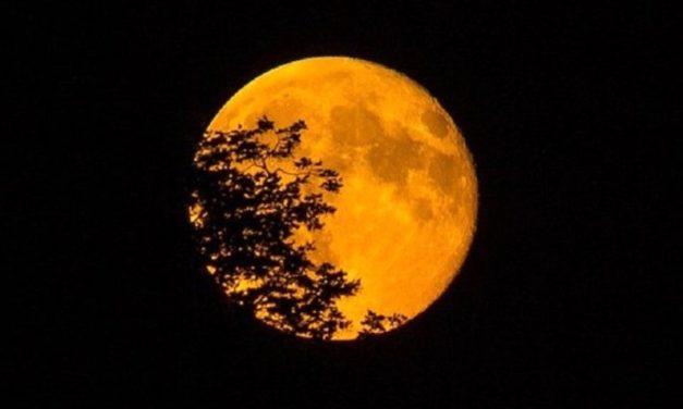 Mann on the moon, il Mann di Napoli omaggia i 50 anni dall'alunaggio