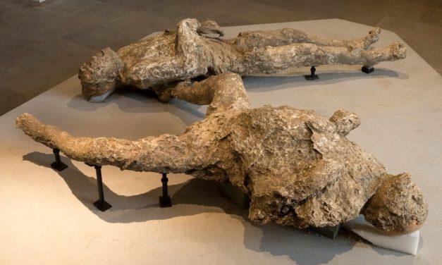 Pompei scavi apre il nuovo dell'Antiquarium